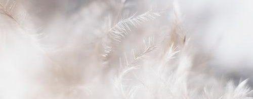 cropped-photo-1515339760107-1952b7a08454-e1554557972627.jpg